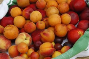 A delicious assortment of stone fruits