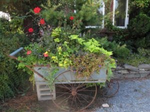 A really fun planting in a garden cart - dahlia, sweet potato vine, and lantana