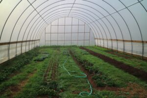 The Farm has an expansive vegetable garden, both indoors and out. This is the inside of one of the hoop houses. Blackberry Farm has three gardeners to maintain all the crops - a garden manager, the Farmstead School manager, and a master gardener.