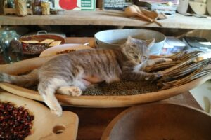 At the Garden Shed, I came across a very cute cat napping in a bowl of peppercorns and okra.