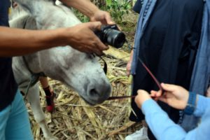 This photo was funny - Lucas the donkey started munching on Martha's camera strap, so the guide had to quickly trade the strap for a piece of sugar cane.