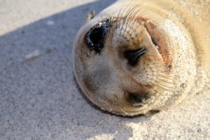 This is my favorite picture from the trip. A baby sea lion looking at me. I was able to get really close to take it.