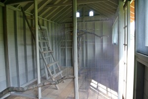 Strong wire mesh is secured on the center wall to create two separate sides of the coop. The peacocks will be separated from each other along with their peahens.