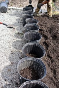"This ""black gold"" is made right here at my farm, and used for all my garden beds. In order to get all the seedlings potted as quickly as possible, the crew created a very productive assembly line."