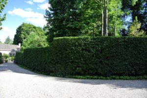 Look at how beautiful the hedge is when finished. Hedges can be stunning in any garden, but left unchecked, it could look very messy, and cast unwanted shade.
