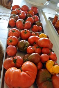During tomato season, I always have a tray of fresh, delicious tomatoes on my kitchen counter.