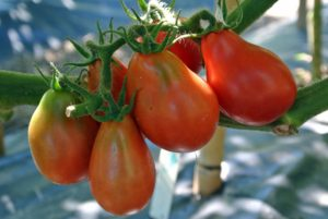 Tomatoes are an excellent source of beta-carotene, vitamins C and K, calcium, potassium, folate, and of course - lycopene.