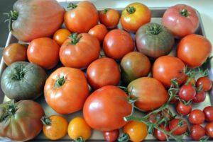 I hope your tomato plants have provided you with lots of juicy, mouth watering fruits this season!