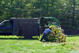 Once the wood is shredded, the chips come out through a chute and into the back of a pick-up truck. The wood chips will be returned to the woods later, where they will eventually decompose.