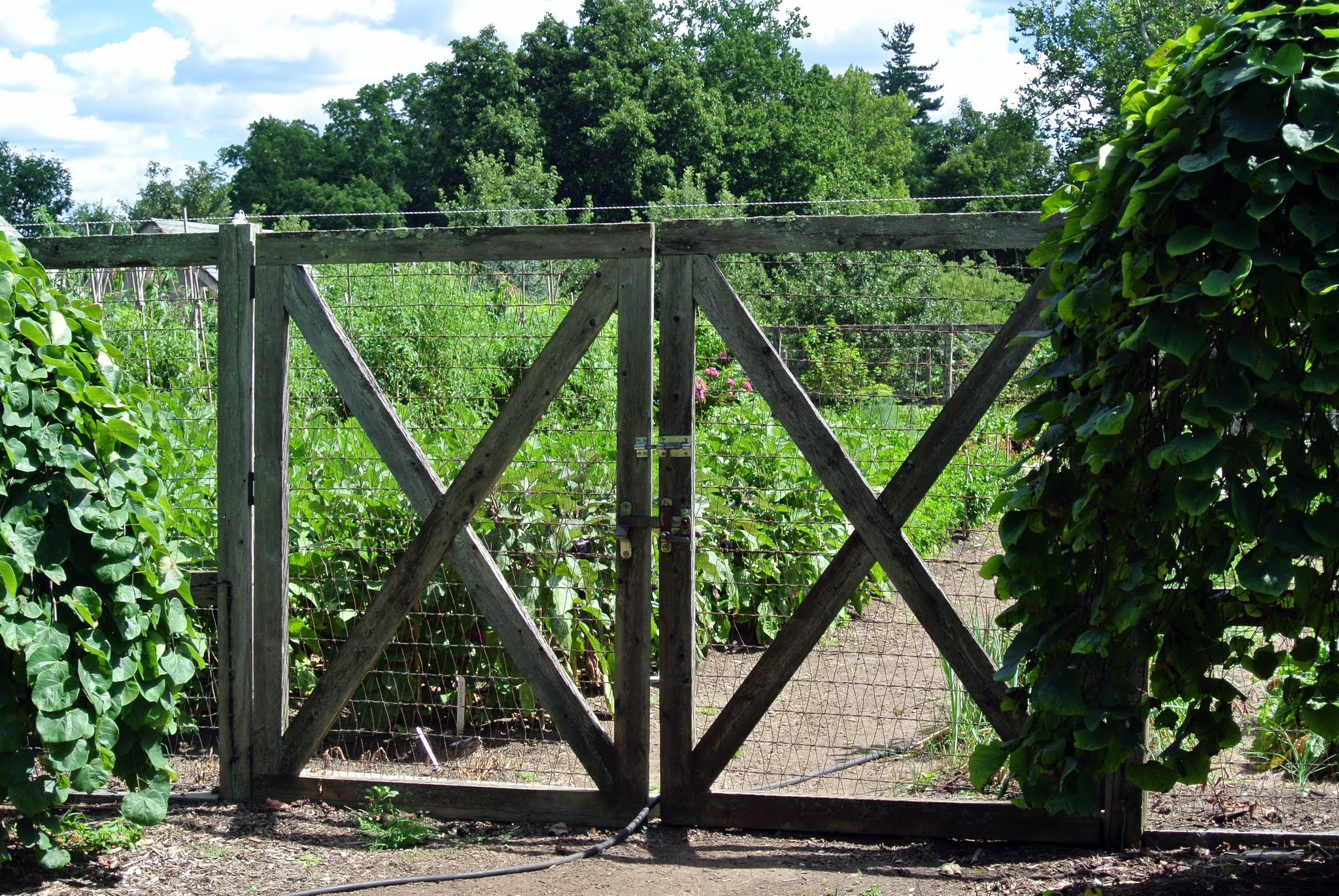 The Martha Stewart Blog Blog Archive Growing Tomatoes At My Farm