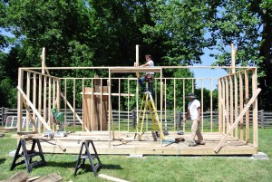 The next phase of our peafowl coop project was to build the frame for the walls. Two by six-inch studs were put up every 16-inches to create a strong, solid structure. Studs were also put up to support the roof pitch.
