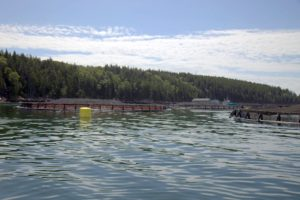 This is our first glance of the salmon fish farm nets.