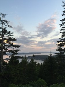 From my large terrace, these magnificent red spruce trees frame the glorious view of Seal Harbor, with Sutton Island in the distance.