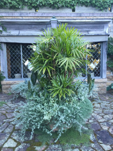 Here it is now - so full, you can hardly see the planter. It is filled with palm and underplanted with Helichrysum petiolare, and alocasia.