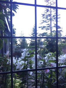 Here are more lilies growing outside this leaded window.