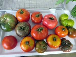 Here in the northeast, this summer has been very, very hot - perfect for tomatoes. I grow a lot of tomatoes. We have about 100-plants in my garden.