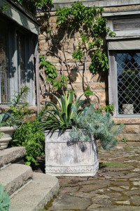 Last May, we filled this antique square lead planter with agave and the easy-to-care-for senecio.