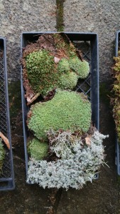 Kevin used sphagnum moss, pincushion moss, Mountain Moss Leucobryum, plume moss, bog moss and other woodland elements that vary in thickness and texture.