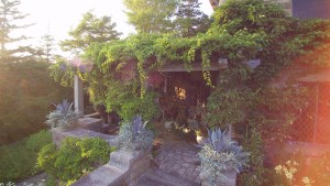These are the steps to the West Terrace, where the pergola above is covered with kiwi vines that provide lots of shade.