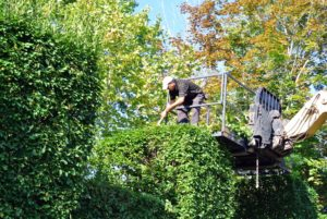 When the roadside of the hornbeam hedge was finished, it was time for the the tops of the tall hedges to be done. The Hi-Lo is very useful, and because the hedge is accessible from the parking lot, it always comes in handy for this task.