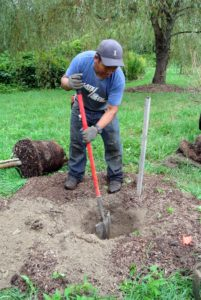 Meanwhile, Phurba is digging a hole for a young weeping willow tree. When I first planted this grove of weeping willows, I put at least 25 in a marshy area in one of the lower fields. Every year or so, I add to this collection.
