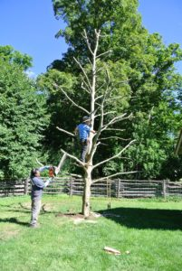 Pete cuts any branches that are too low, short or seemingly unsafe.