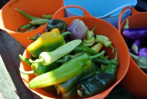 The light colored pepper on top is a banana pepper. It's a medium-sized member of the chili pepper family that has a mild, tangy taste and often pickled, stuffed or used as a raw ingredient in foods.