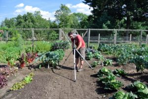 After weeding the vegetable garden, Ryan positioned a sprinkler. Mornings are the best times to water - when water pressure is high, evaporation is low, and the soil can absorb the water before the sun heats up the ground.