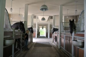 The next stop was my stable, where Sarah and four of my five Friesian horses were ready to greet our guests.