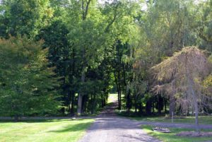Every group touring the farm loves the winding road into the woodlands. During this time of year, the foliage creates such a lovely canopy of shade.