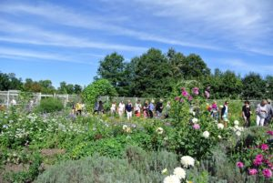 Guests had the opportunity to walk through the cutting garden. Every group experiences a different tour when they visit the farm depending on what is blooming at the time.
