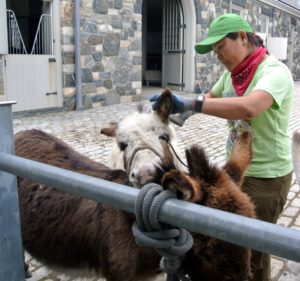 Down by the stable, my three Sicilian donkeys, also got a good cleaning.