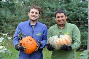 Ryan and Wilmer are pleased with how productive the pumpkin patch was this year. Ryan is holding a 'Knuckle Head' pumpkin - a large fruit with numerous warts - a must for Halloween.