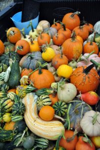 Pumpkins and winter squash come in so many shapes, sizes, and colors!