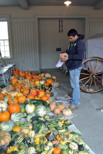 Wilmer wiped down all the pumpkins with a damp cloth.