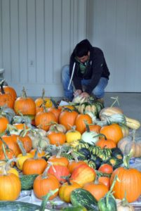 Modern pumpkins grow commercially in the United States, China, Mexico, and India. Farmers in the United States grow more than a billion pounds annually, with Illinois growing the most.