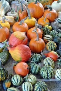 We grow many pumpkins and squash from heirloom seeds. Heirlooms are old-time varieties, open-pollinated instead of hybrid, and saved and handed down through multiple generations of families.