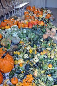 Look at our wonderful bounty. Let me know how productive your pumpkin and winter squash crops are this year.