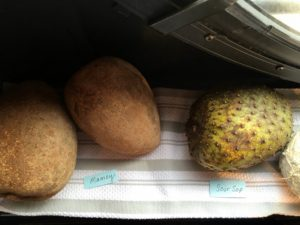 Here is a mamey, or mamey sapote, a unique, tropical tree fruit that is creamy and sweet, and a soursop, another sweet tasting fruit similar to the pawpaws I grow at my farm.