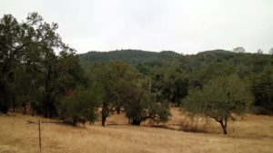 The vineyard is more than 600-acres, but in an effort to teach conservation and to protect wild land, the Chappellets have only planted 100-acres with vines - the rest is oaks, olives and other indigenous trees.