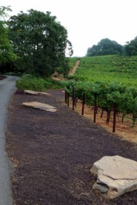 "Molly uses found objects in sculptural ways at the vineyard. This purple walk, covered with grape seeds, is a product of the winemaking. It is punctuated by giant stepping stones excavated from the vineyard. This is called the ""Elephant Walk""."