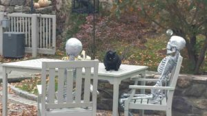 Blackie, the greenhouse cat, is even interested to visit with the skeletons.