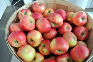 We had fresh apples available from Red Jacket Orchard. http://redjacketorchards.com/
