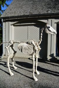 And, a menacing Halloween skeleton horse. This equine friend is 74-inches tall and has sound effects. It's from The Home Depot.