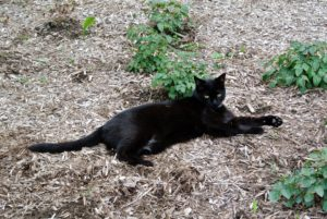 Blackie often rests nearby and watches all the activity.