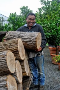 Pete began the Herculean task of moving these logs into the greenhouse.
