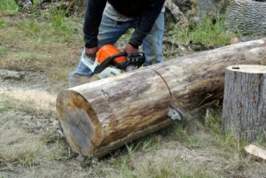 Pete cut this log into two and a half foot long pieces. He also cut a number of smaller ones - about a foot long.