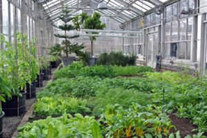 This is a photo of the greenhouse last winter - it's filled with amazing produce, but the space above is empty.