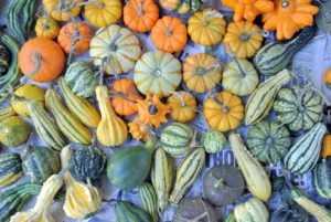 We used many of the gourds from our recent harvest here at my farm.