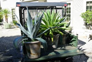 The most critical factor in moving houseplants is temperature. Avoid prolonged exposure to heat or cold, with temperatures below 35 degrees Fahrenheit or higher than 95-100 degrees Fahrenheit.